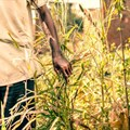 """""""African countries to urgently expand food reserves, keep food supply flowing"""""""