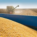 South Africa can expect bigger summer grains and oilseeds crop