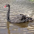 Financial services sector prepped to tackle Covid-19 black swan