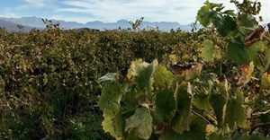 18,000 jobs lost in wine industry - Vinpro