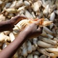 Africa Food Security 11 via