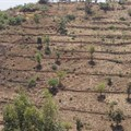 Covid-19 recovery is a chance to improve the African food system