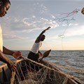 More than a third of fish stocks are being overfished