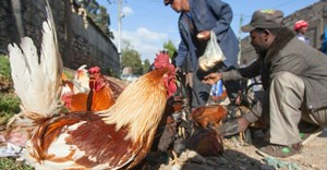 New body to drive transformation in the poultry industry