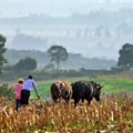 Smallholder livestock farmers to be included in Covid-19 relief fund