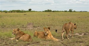 Covid-19, Africa's conservation and trophy hunting dilemma