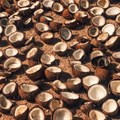 Coconut oil production threatens five times more species than palm oil - new findings