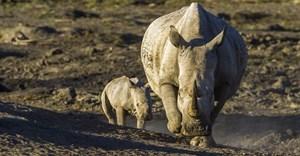 2020 Rhino Conservation Awards winners celebrated on World Ranger Day