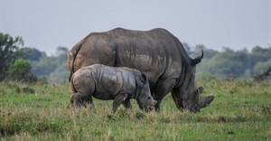 IRF awards grant to offset Covid-19 impact, protect rhinos in Southern Africa
