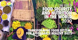 New UN report: Tens of millions more going hungry globally
