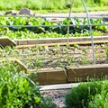 Urban farming: Is it financially and spatially feasible?