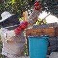 Beekeepers demonstrate resilience during Covid-19