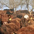 Secure meat-hungry food systems to prevent next pandemic
