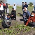 CoCT celebrates 33 urban farming graduates