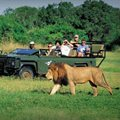 Top 10 countries in Africa for a safari holiday of your dreams