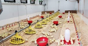 Emerging poultry farmers to get hands-on experience with advanced KZNPI chicken house