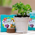 Checkers Little Garden is back, with locally-made seedling kits