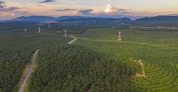 A palm oil plantation in Malaysia. (Shutterstock)