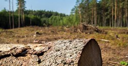 Young women encouraged to take up careers in forestry