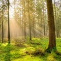 #MentalHealth4SMEs: Get out in nature