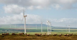 The West Coast One wind farm near Vredenburg has operated since 2015. Environment minister Barbara Creecy says the wake effect on this facility of a proposed new neighbouring wind farm must be investigated before it can also be approved. Photo: John Yeld