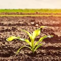 SA agriculture posts strong growth in Q2 of 2020