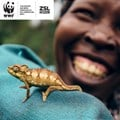 2020 WWF Living Planet Report warns against business as usual