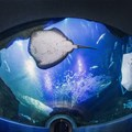 Two Oceans Aquarium launches a series of dinners