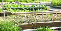 FAO launches Green Cities Initiative to help transform agri-food systems