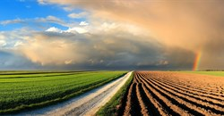 Outlook for the agricultural sector into 2021