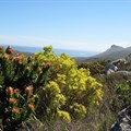 Sustainable use of land vital for fynbos protection