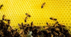 Nedbank, Boland Trees for Bees to safeguard honeybees