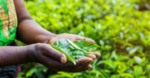 Cultivating agri development, economic growth in Africa