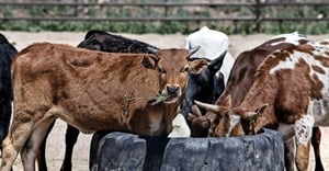 New biosecurity initiative to pay dividends to cattle farmers