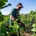 Problematic assumptions raise questions about South Africa's new land reform plan
