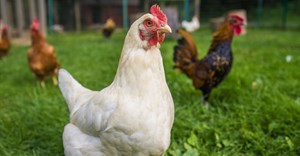 Safcei joins global cage-free campaign against Burger King owner