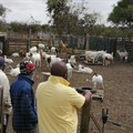 Free veterinary support for smallholder livestock farmers