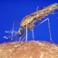 Mosquitoes and parasites do not respect country borders. CDC/James Gathan