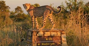 SANParks Week returns with free access to parks from 16 November