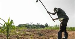 Boost smallholder phone access for better crop yields