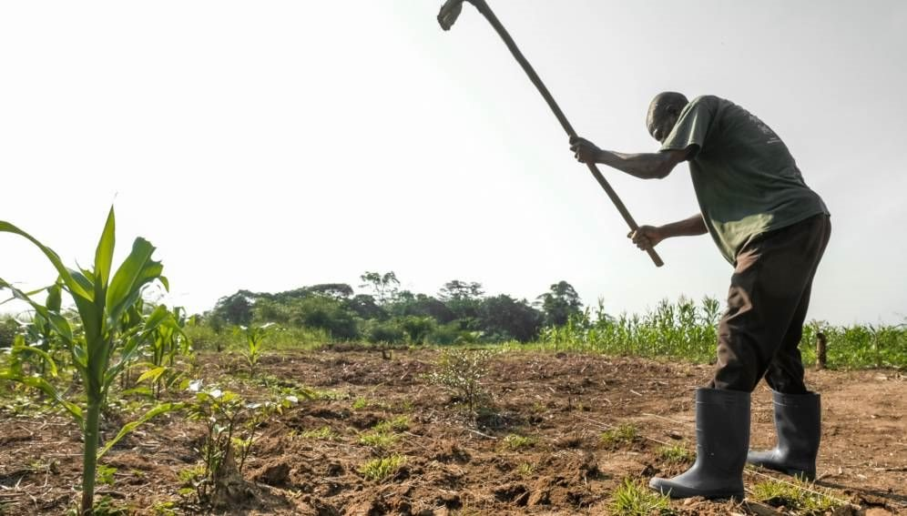 Boost smallholder phone access for better crop yields