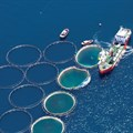 A balanced approach to ocean and inland aquaculture will nourish the world
