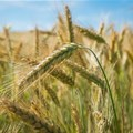 Low rates positive for agriculture heading into the new crop season