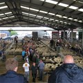 Biosecurity rules become law for livestock agents