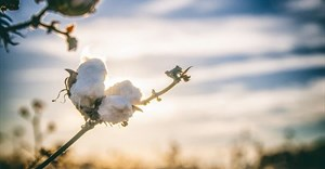 Covid-19's effect on global cotton trends