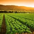 Agriculture's 3rd quarter 2020 GDP outcomes still impressive