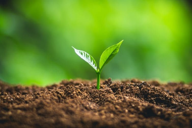 This year's World Soil Day theme is: 'Keep soil alive, protect soil biodiversity'. shutterstock