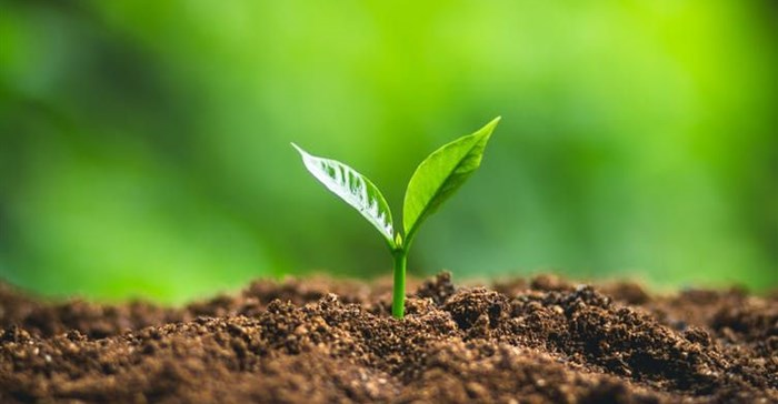Food and clean water start with soil biodiversity: Learning more about it is urgent
