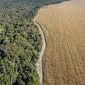 Demand for meat is driving deforestation in Brazil - changing the soy industry could stop it