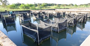 WorldFish, LVFO strengthen research ties boosting aquatic food availability in East Africa
